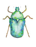 Green chafer on white background. Sketch watercolor stock illustration
