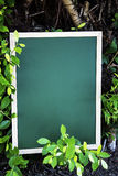Green chalk board placed on the ground Stock Photography