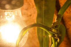 Green chameleon resting on a bamboo branch, heating under lamp. Selective focus royalty free stock photos