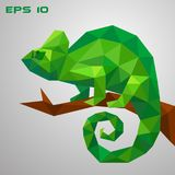A green chameleon is sitting on a branch and looking. Thoughtful and lazy wild life. Low poly reptile on a white. Background Royalty Free Stock Photography