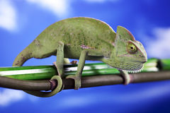 Green chameleon on sky background Royalty Free Stock Images
