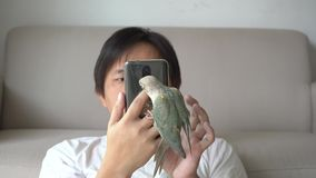 Green-cheeked parakeet biting a smartphone. Green-cheeked parakeet or green-cheeked conure biting a smartphone on the sofa stock video