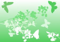Green cherry tree flowers and butterflies Stock Images