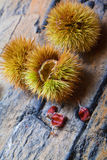 Green chestnuts Stock Images