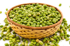 Green Chickpeas Stock Photography
