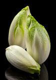 Green chicory stock photography