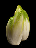 Green chicory on black Stock Photo