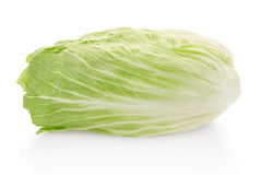 Green chicory salad Stock Photos