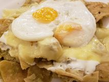 green chilaquiles with melted cheese and fried eggs, typical mexican food royalty free stock photography