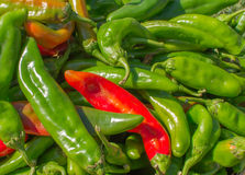 Green Chile Harvest Royalty Free Stock Photography