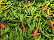 Green Chile Peppers. Fresh spicy green chile peppers from Hatch, New Mexico Royalty Free Stock Photos