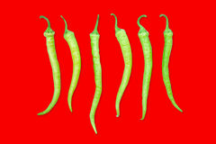 Green chili pepper in a row. Stock Photos