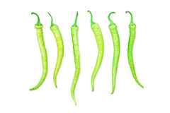 Green chili pepper in a row. Stock Images