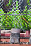 Green Chili Roasting Stock Image