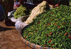 Green chilis. For sale in a vegetable market in Burma Royalty Free Stock Photography