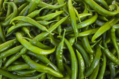 Green chilli peppers background Stock Photography
