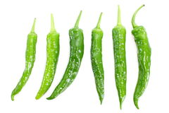 Green Chilli Royalty Free Stock Photo