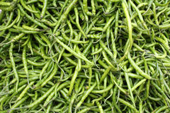 Green Chillies Background Royalty Free Stock Images
