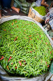 Green chillies for sale Stock Photography