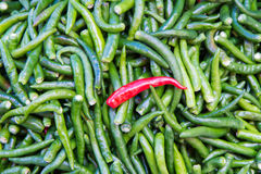 Green chillies for sale at market Royalty Free Stock Photography