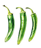 Green chilly peppers. Watercolor with Green chilly peppers royalty free stock image