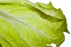 Green China Cabbage Stock Photo