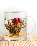 Green Chinese flower tea is brewed in the cup Royalty Free Stock Photo