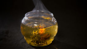 Green Chinese tea flower bud blooming in glass teapot Royalty Free Stock Photos