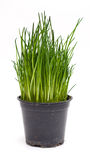 Green chives Royalty Free Stock Photos