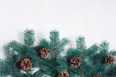 Green Christmas fir tree branches with cones isolated on white background. Stock Images