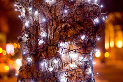 Green christmas firtree. At night Royalty Free Stock Image