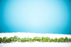 Green CHristmas pine fir in snow Royalty Free Stock Image