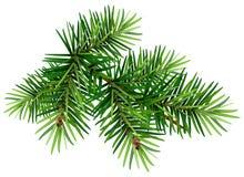 Green Christmas pine tree branch Royalty Free Stock Photo