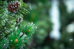Green Christmas pine tree at night soft focus.  Royalty Free Stock Photography