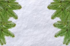 Green Christmas pine tree and snow surface white background. On a bright cold morning day Royalty Free Stock Photography