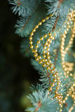 Green christmas tree background Stock Photography