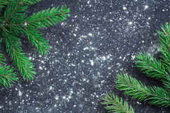 Green Christmas tree branches on winter snowbound black space ba Stock Images