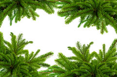 Green Christmas tree isolated on white Royalty Free Stock Images