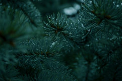 Green Christmas tree royalty free stock photography