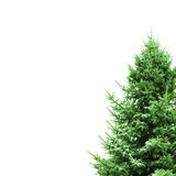 Green Christmas Tree with space for text. Green Pine decoration for Christmas Royalty Free Stock Photography