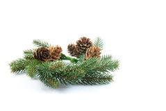 Green Christmas wreath from pine branches and pine cones isolated on white background Stock Photo