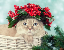 Сat with green Christmas wreath. Portrait of cat with green Christmas wreath with red decorations on the head Stock Photography