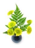 Green chrysanthemum flowers Stock Image