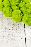 Green chrysanthemum on white wooden background Royalty Free Stock Photos