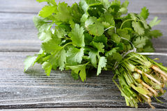 Green cilantro on a wooden boards Stock Image