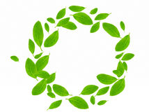 Green circle Stock Photography