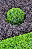 Green Circle formed by Bushes of Purple and Green Stock Image