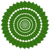 Green circle from leaves Royalty Free Stock Photos