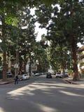 Green city. Big trees big city los Royalty Free Stock Photo