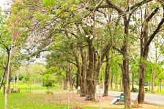 Green city park Royalty Free Stock Image